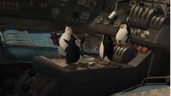 Кто сказал, что пингвины не летают